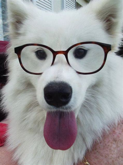 LOOK! These Dog's Are Wearing Glasses & They Suit Them