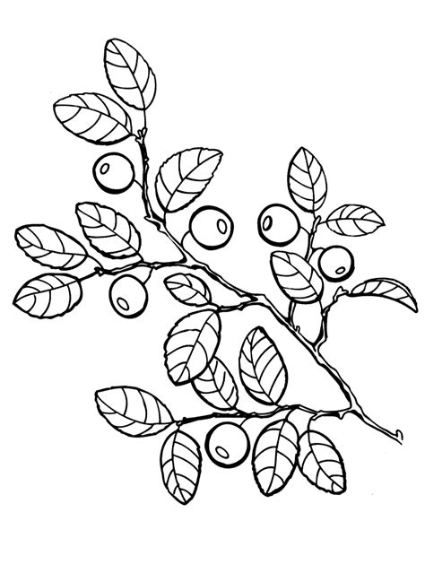 Coloring page - Blueberries