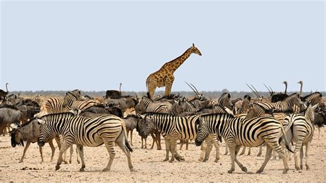 Don't be a ZEBRA: Zero Evidence but Really Adamant