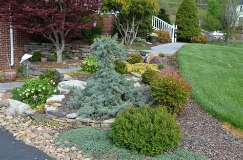 Conifers for Small Garden Spaces | What Grows There